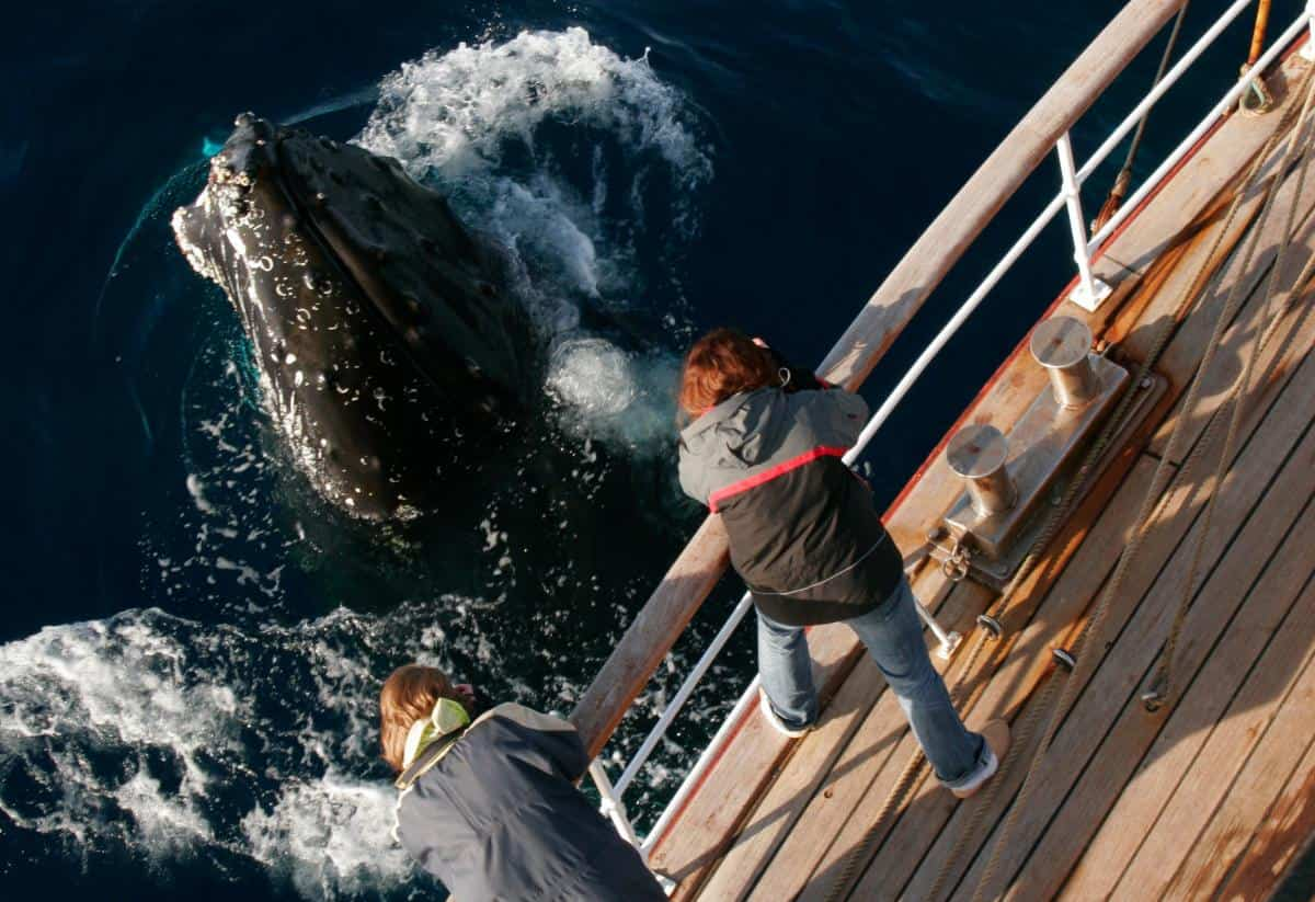 A Humpback comes to say hello on Europa.  Photo by Roland Gockel
