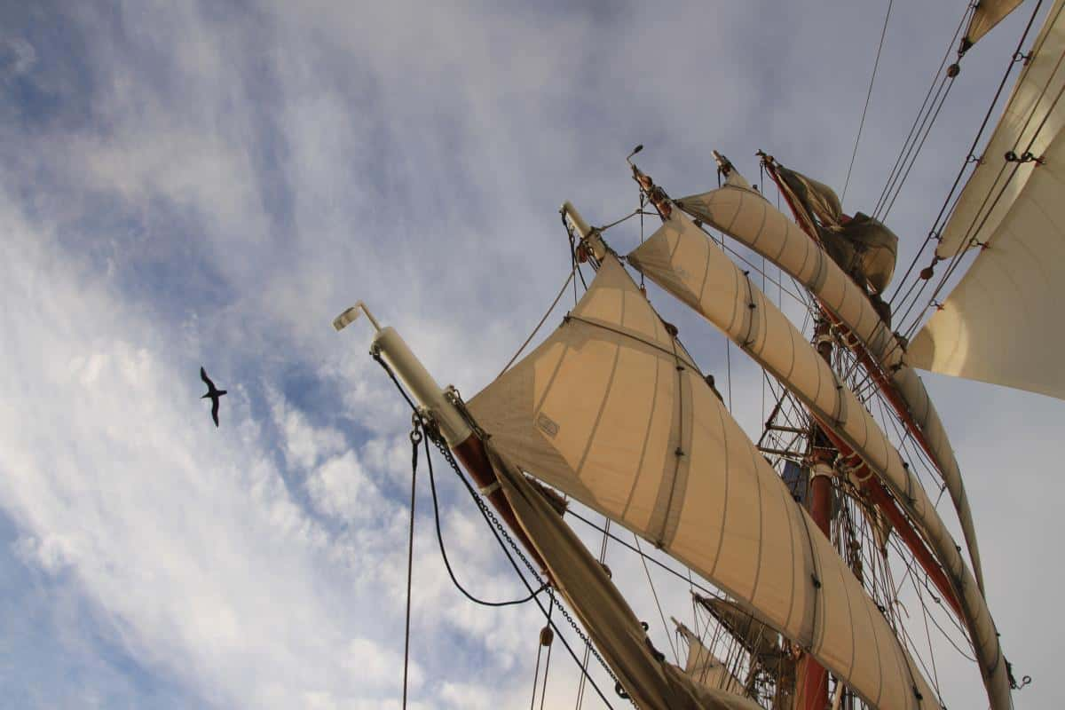 Albatross in the Drakes Passage. Photo by Debbie Purser
