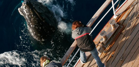 Viewing humpback whales from the deck of Europa