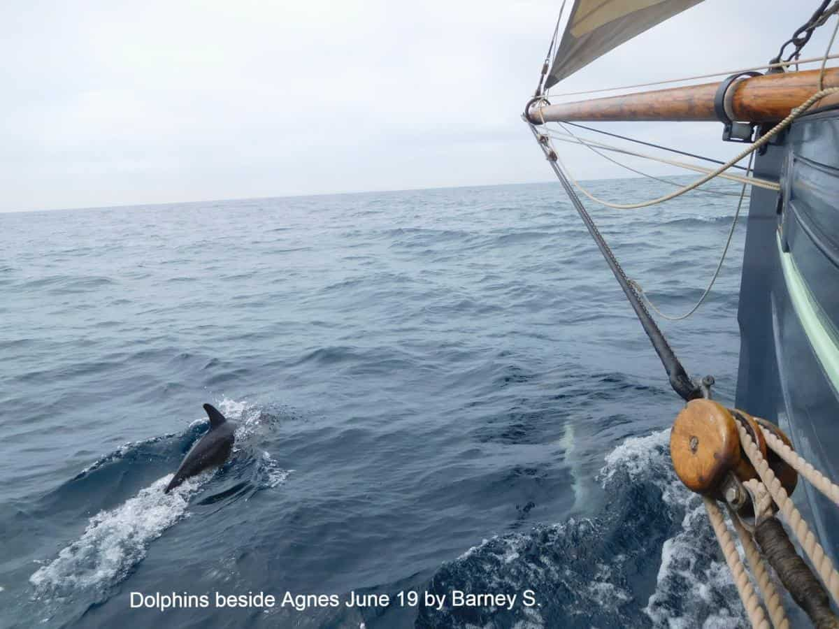 Dolphins beside Agnes - June 2019 - Barney S.