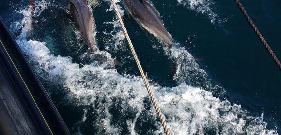 Photography voyage Sailing on Pilgrim with Classic Sailing