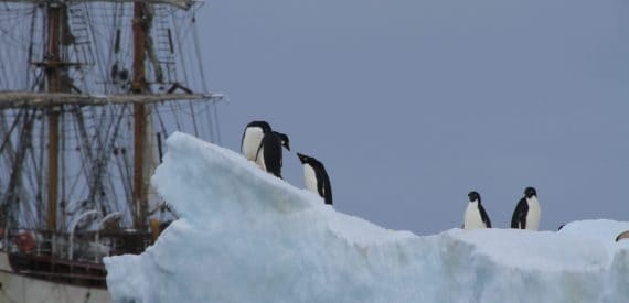 Adelie Penguins and Bark Europa