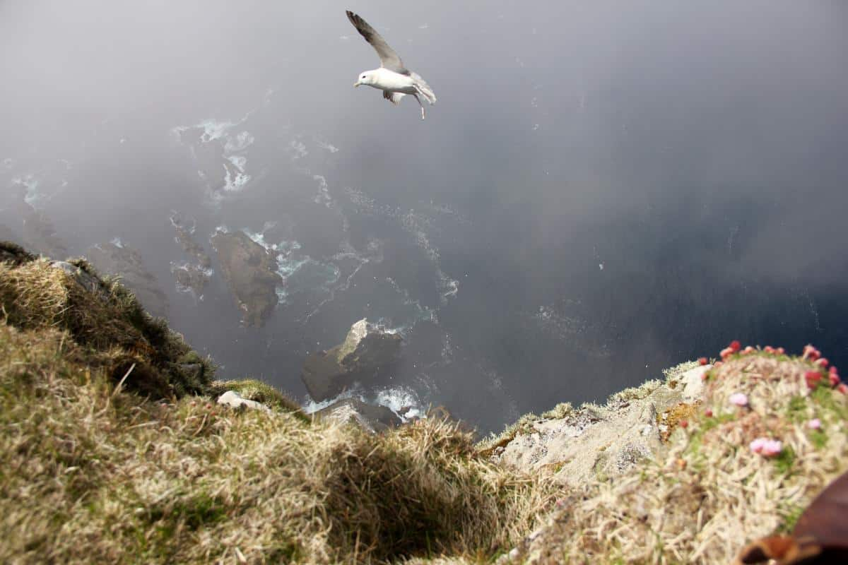 Not a place for those with vertigo. Faroes cliffs and seabirds