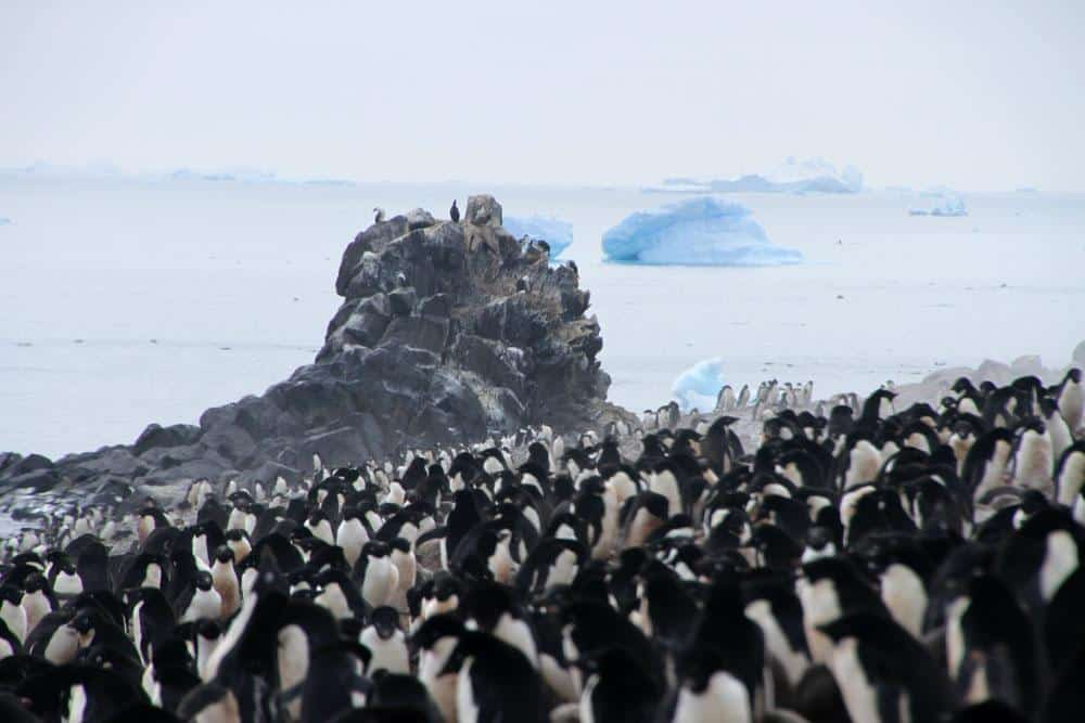 penguins in Antarctica. Tall Ship Expedition on Tecla