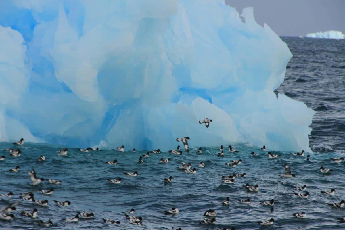 Arctic birds and icebergs