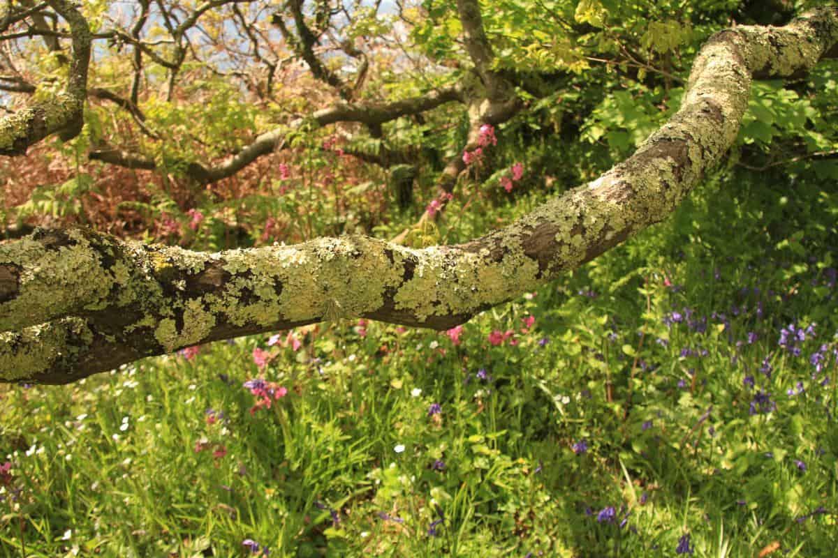 Devon coastal woods - Seasickness cure - hug an oak tree