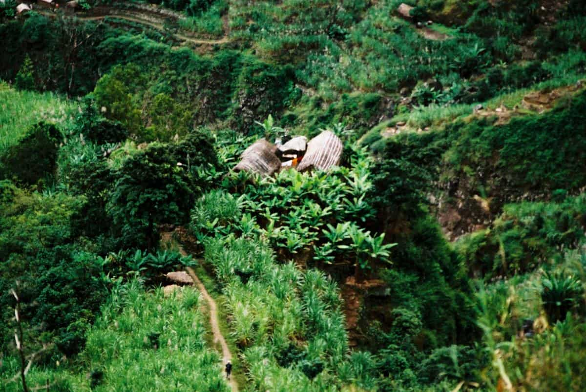 Verdant fields of crops in the coastal gorges on Sao Antao