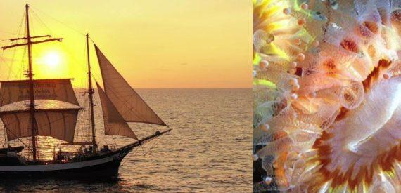 Darwin200 leg 2 with Classic Sailing