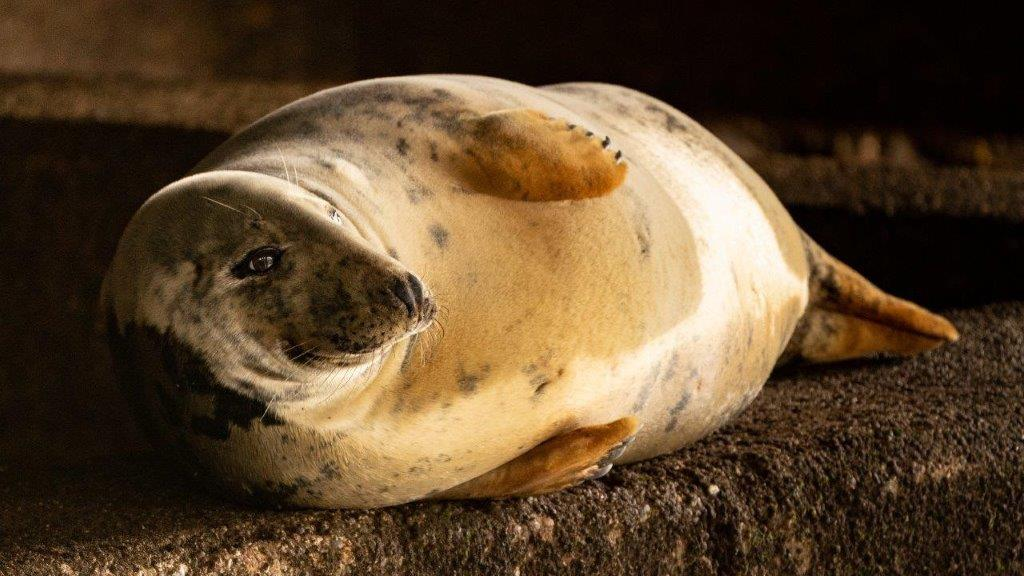 Seal on Farne Isles Sailing with Classic Sailing