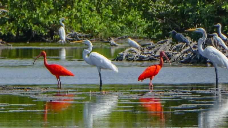 Bigi Pan Rare Bird Sanctuary