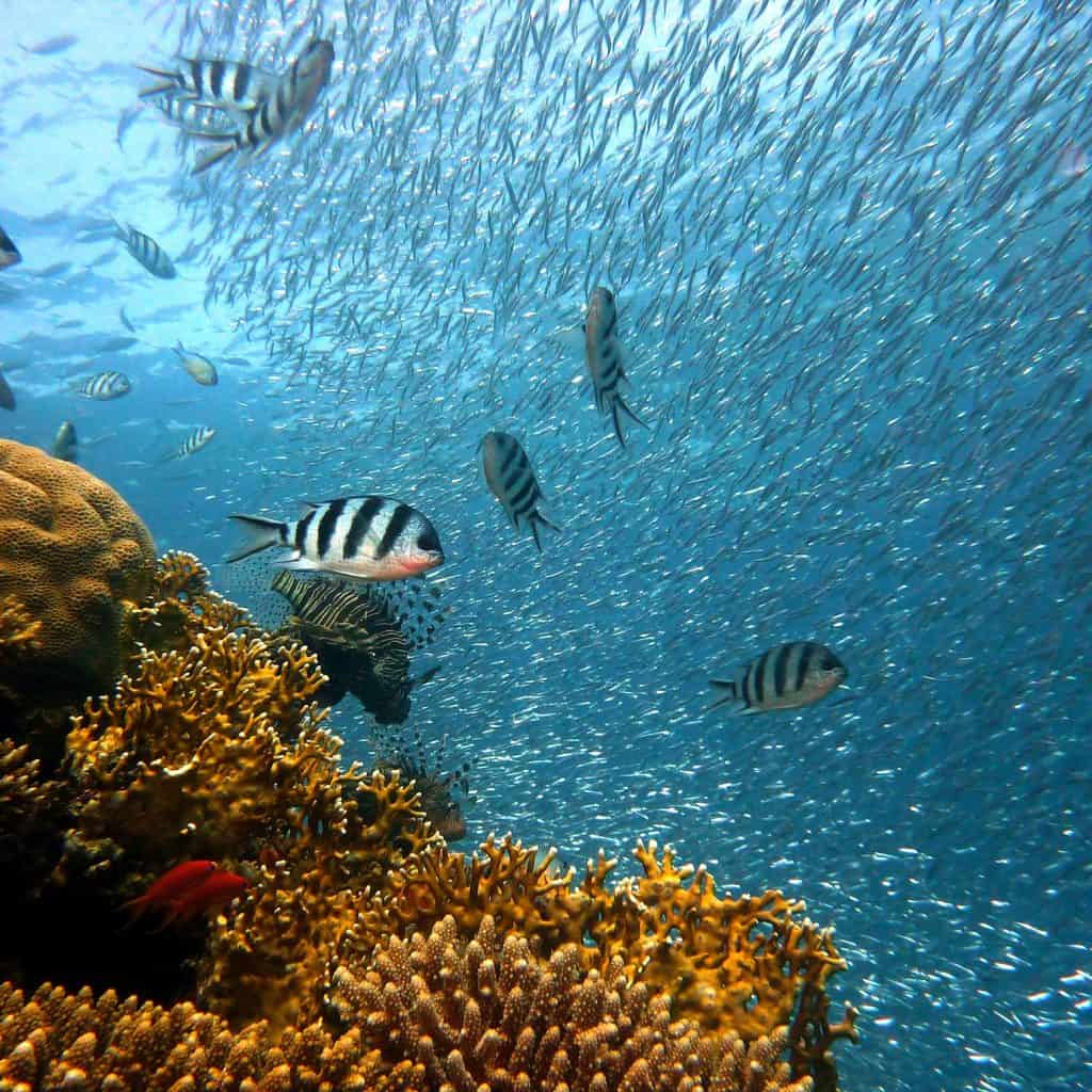 Tropical Fish The Caribbean on a Tall Ship Sailing Morgenster with Classic Sailing